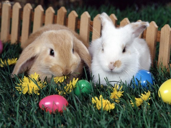 L'attribut alt de cette image est vide, son nom de fichier est 2-lapins-pâques-1.jpg.